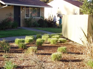 Go Native, Save Water: Xeriscape Gardening DK Landscaping Santa Rosa CA