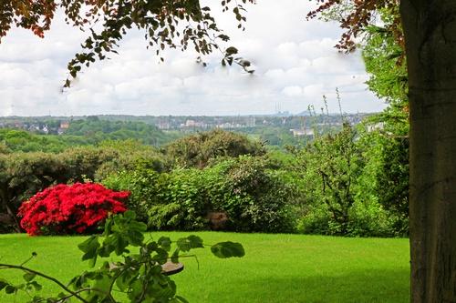 7-Gorgeous-Flowering-Shrubs-for-Shade-DK-Landscaping-CA