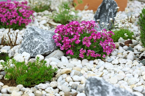 Building A Rock Garden Everything You Wanted To