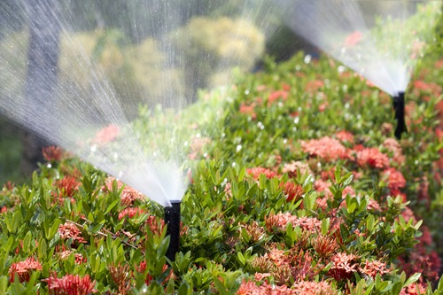 Plant - Maintenance - Sprinkler - Systems - Irrigation - Controllers - DK - Landscaping - CA