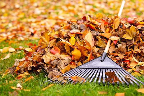 Fall-Garden-Care-dk-landscaping-CA