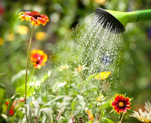 Useful-Tips-For-Watering-Your-Garden-DK-Landscaping-CA.png